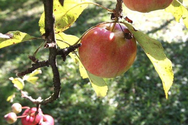 Pri odstránení zvyškov potravy pomôže aj jablko.