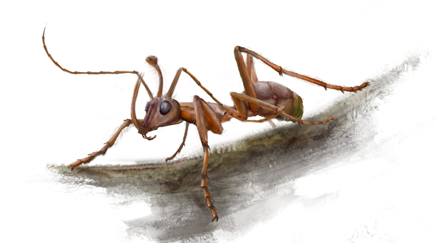 Vizualizácia mravca ceratomyrmex ellenbergeri.