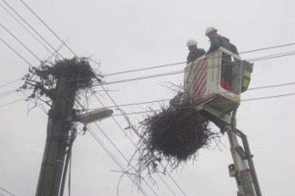 Vo Vyškovciach nad Ipľom bocianie hniezdo kvôli sťažnostiam presťahovali o ulicu ďalej.