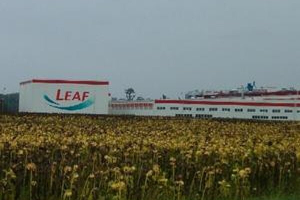 Leaf Slovakia v Leviciach vyrába curovinky pre zahraničný trh.
