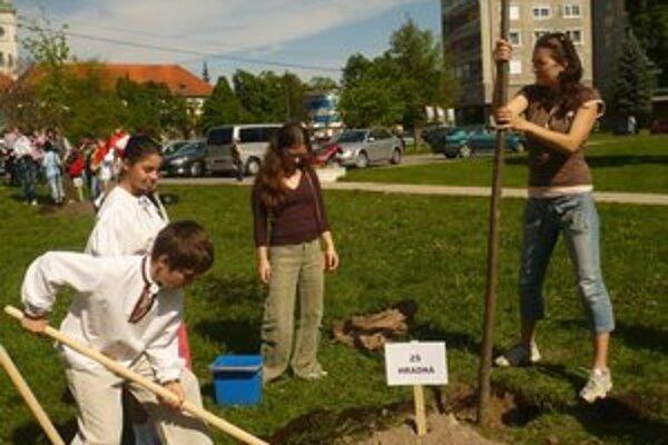 """Súčasťou novozámockého projektu bolo aj sadenie """"školských"""" stromčekov."""