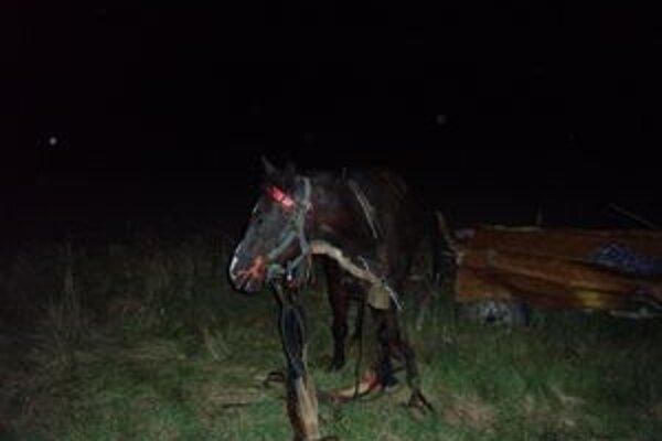 Situácia po nehode. Kôň zostal na vlastných nohách.