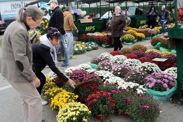 Živé chryzantémy. Výber farieb i veľkostí je bohatý. Ceny sa veľmi nelíšia.