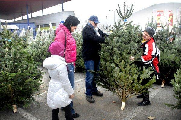 Renáta s Lenkou obdivujú jedličku. Chcú vymeniť umelý stromček za živý.