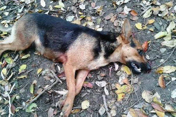 Zastrelený pes. Osudným sa mu stal zúrivý útok na policajtov.