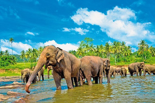 Slony na Srí Lanke
