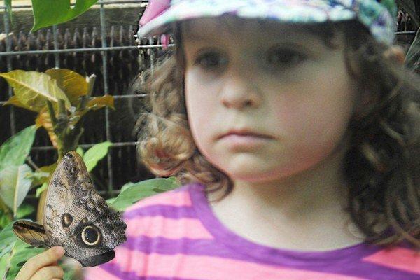 Margarétka prilákala motýľa. Štvorročné dievčatko si chcel zblízka pozrieť zvedavý motýľ Caligo memnon.