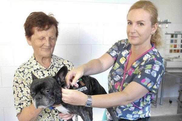 Pes pri povinnom čipovaní. Veterinári denne vykonajú 6 až 10 čipov.