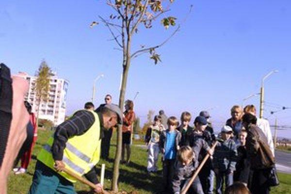 Na KVP pri Moskovskej triede. Adoptované stromčeky tu stoja už takmer pol roka.
