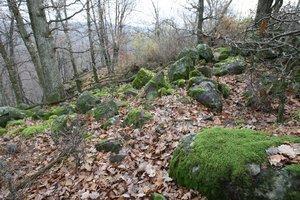 Pozostatky našli v lese.
