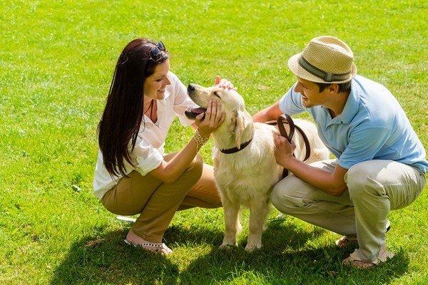 Pes, najvernejší priateľ človeka.