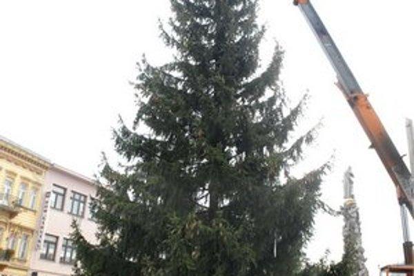 Mesto rozvoňal stromček. Smrek už na Hlavnej vyrástol, aby zvestoval, že Vianoce sú pred dverami.
