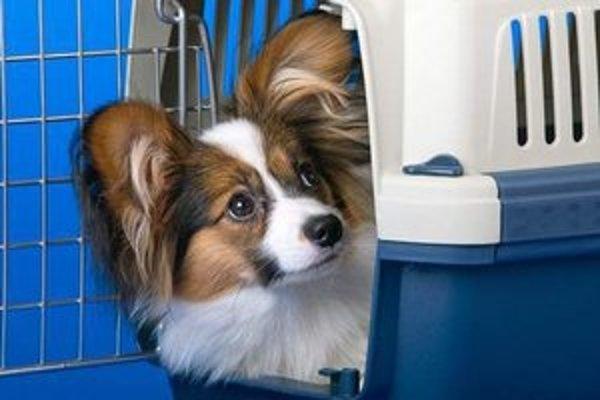 Pes by mal v lietadle cestovať v klietke