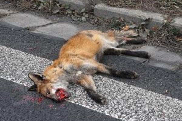 Líšky-Nikdy sa ich netreba dotýkať, môžu mať besnotu či svrab.