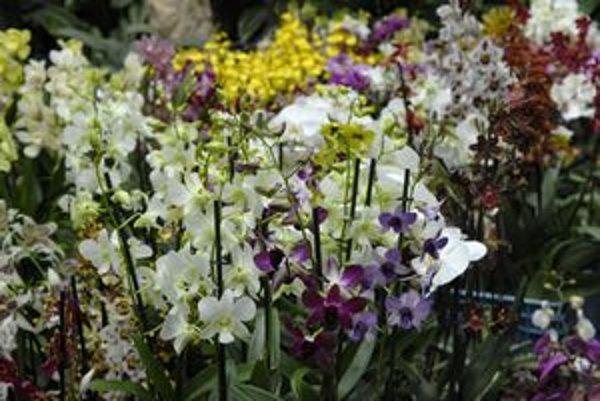 Skvosty rastlín. Na výstave bude záplava farieb a druhov.