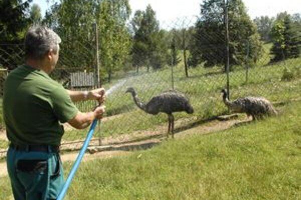 Príjemné osvieženie. Pre emu hnedých je sprchovanie veľká zábava. Doslova ho zbožňujú.
