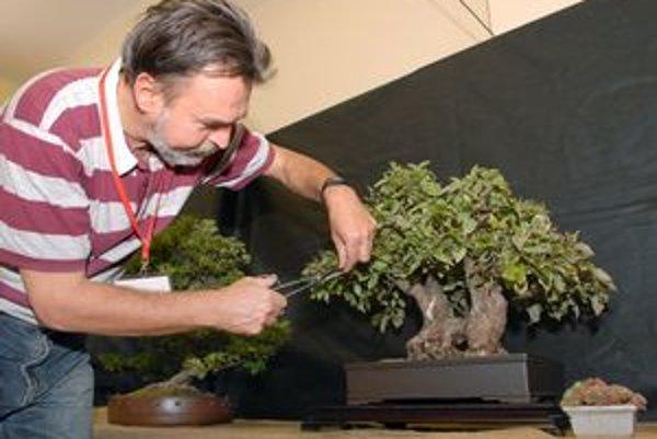 J. Kolesár tvaruje bonsaje už vyše štvrťstoročie