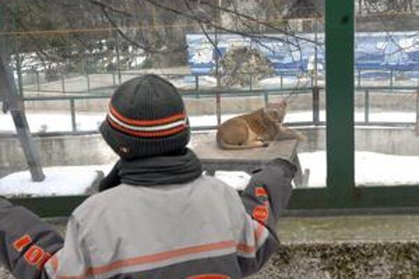 Obdivovať leva. Lepšie ako sa nudiť, je zájsť napríklad do košickej zoo.
