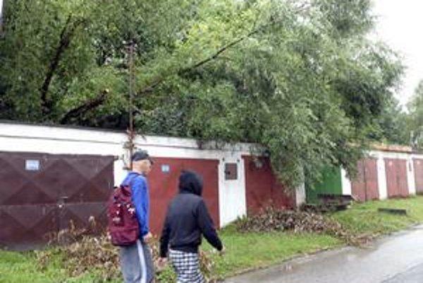 Spadnutý strom. Nachádza sa len pár centimetrov od stĺpu elektrického vedenia.