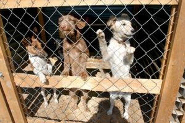 Psa ako darček za vysvedčenie pracovníci útulku rodičom vyhovárajú.