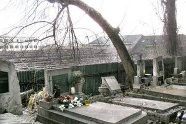 Nebezpečný strom. Strom vyrastajúci z hrobu sa nebezpečne nakláňa ponad oplotenie. Jeho dni sú spočítané.