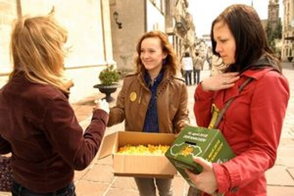 Deň narcisov v uliciach Košíc. Vyzbieralo sa vyše 39-tisíc eur.