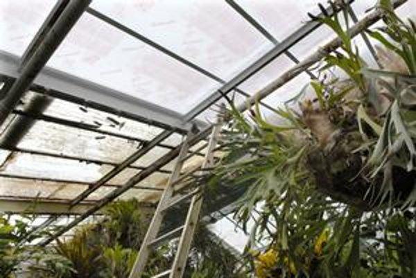 Skleník bez skla. Klasické sklo vymieňajú v skleníku Victoria za polykarbonát. Strecha bude bezpečnejšia.