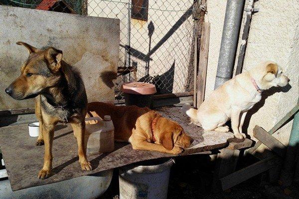 Prešovu chýba aj klasická psí útulok.