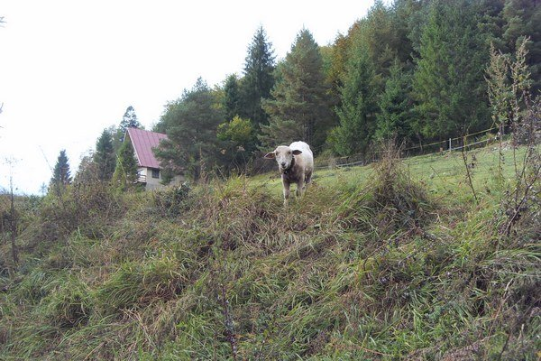 Aj drobní chovatelia si chcú dať vzorky mlieka vyšetriť.