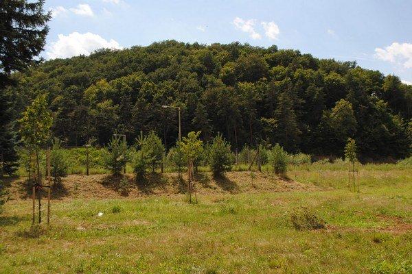 Veľkošarišské lesy. Lesný úrad za ne vyrubil pokutu.