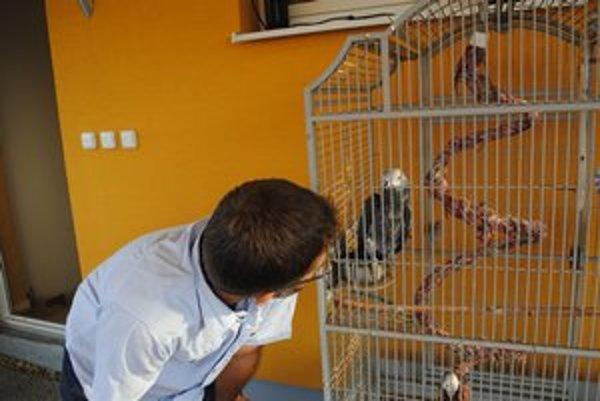 Hovoriaci papagáj Kiko. Spríjemňuje ľuďom posedenie v jednej prešovskej reštaurácii.