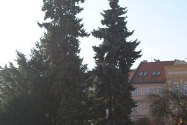 Ihličnaté stromy v posledných dvoch rokoch chorľavejú.