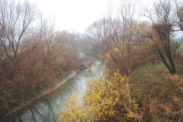 Torysa. Medzi Petrovanmi a Lemešanmi niekto vyrúbal veľké množstvo stromov.
