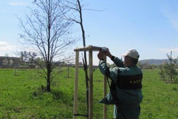 Nové stromčeky. Pri brehoch Torysy vysadia vyše 200 stromov, 400 kríkov a 300 sadeníc brečtanu.