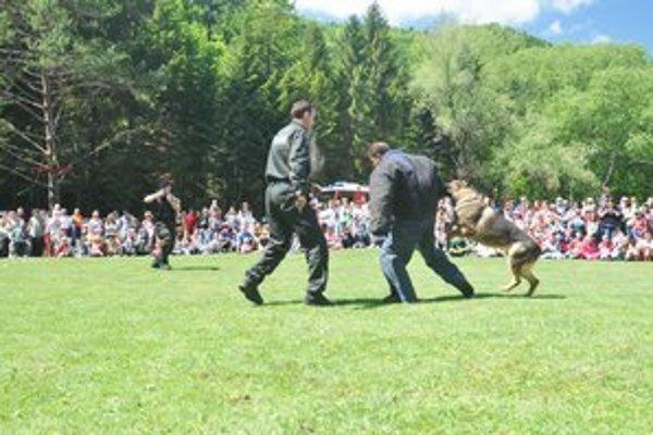 Kynológovia ukázali, ako cvičené psy reagujú na povely.