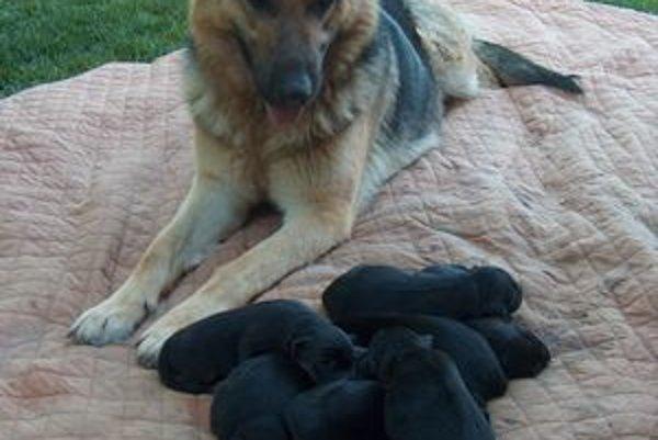 Mama a osem potomkov. Dona svojich majiteľov riadne prekvapila.