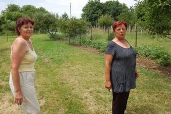 Znechutené ženy. Diviaky im ničia záhrady.