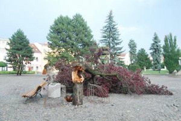 Storočný strom zlomil vietor.