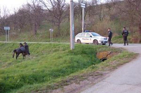 Nájdený utečenec. Policajti nedovolili jeho majiteľovi, aby s ním šiel domov po vozovke. Koňa preto viedol po poli popri ceste.