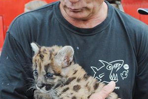 Drezér Strnad. So tigricou Sambou. Na malej snímke mláďa pumy americkej Rony.