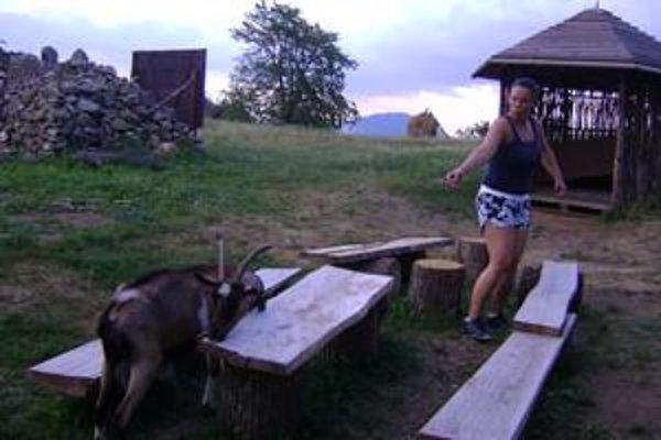 Koza Lady Gaga. Turisti ju kŕmia chlebom a inými dobrôtkami.