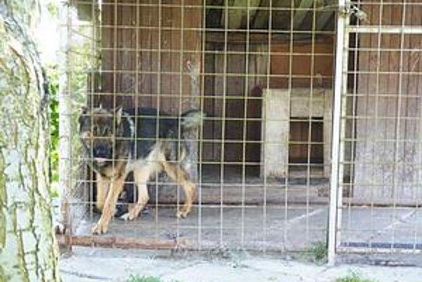 Pes, ktorý útočil je v karanténe. Vraj bol vycvičený a inteligentný.
