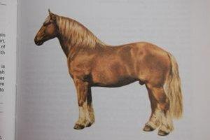 Ťažný kôň. Takto vyzeral ukradnutý 15-ročný hnedý žrebec.