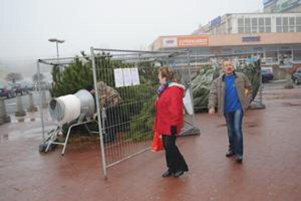 Živé stromčeky. V Prešove už začali s predajom vianočných stromčekov.