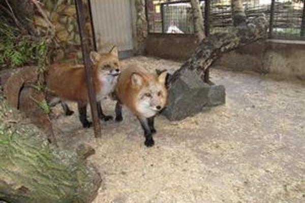 Nora a Braňo. Noví obyvatelia zooparku.