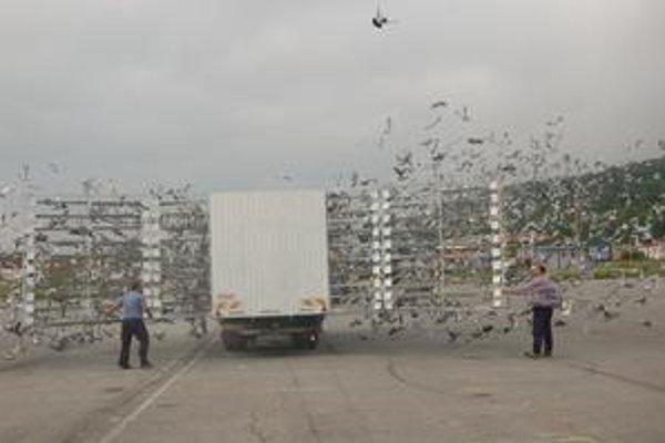 Štart. Tisíce holubov sa do vzduchu dostali takmer naraz.