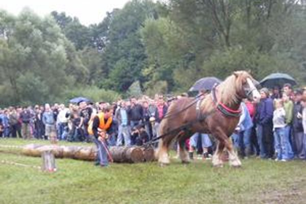 Furmani v Ľutine. Práca s koňom v lese je vraj veľmi náročná.