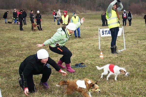 Štart psích pretekov. V Dargove sa súťažilo vpiatich kategóriách.