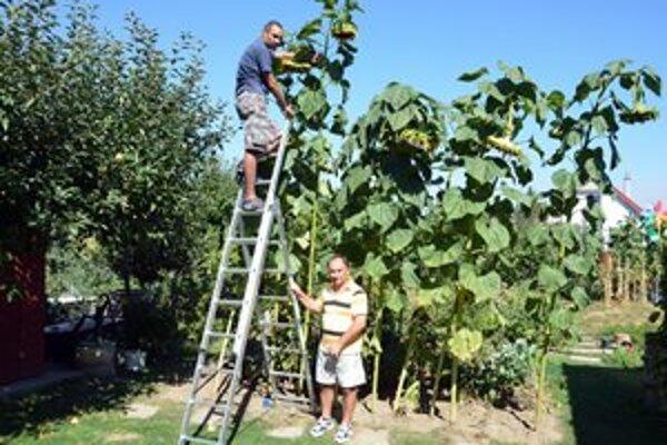 Predseda ZO Oríšky Mikuláš Grecula a syn majiteľa záhradky Peter Ivan.