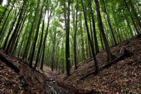 V hre je pôda a lesy.